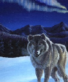 Wolf courtesy of Vision Quest