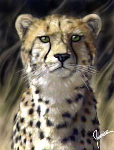 Cheetah by Brandi Jasmine