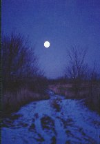 Moonstruck Road by Cheryl Lynne Bradley