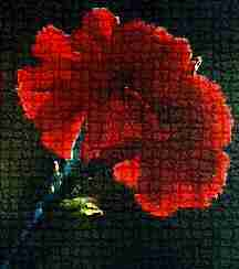 Red Carnation by Cheryl Lynne Bradley